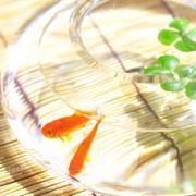金魚水槽 夏場の水温管理と水温を下げる方法・正しいやり方