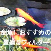 飼育環境で変わる金魚におすすめの濾過フィルターと水流対策