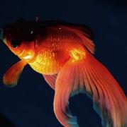 金魚が動かない