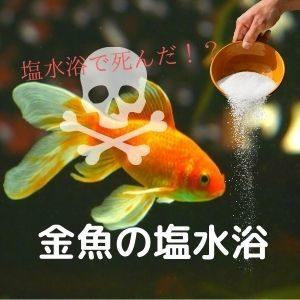 金魚が塩水浴で死んだ