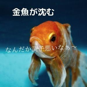 金魚が底に沈む