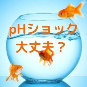 金魚のphショック