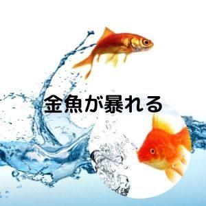 金魚が暴れる