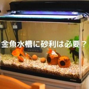 金魚水槽に砂利は必要か